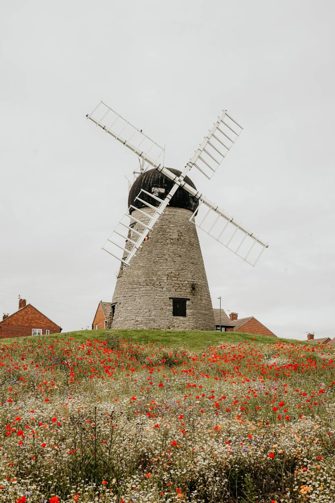 A stone windmill in a field of wildflowers. Poppies, daisies, and other flowers are at the bottom of the small hill.